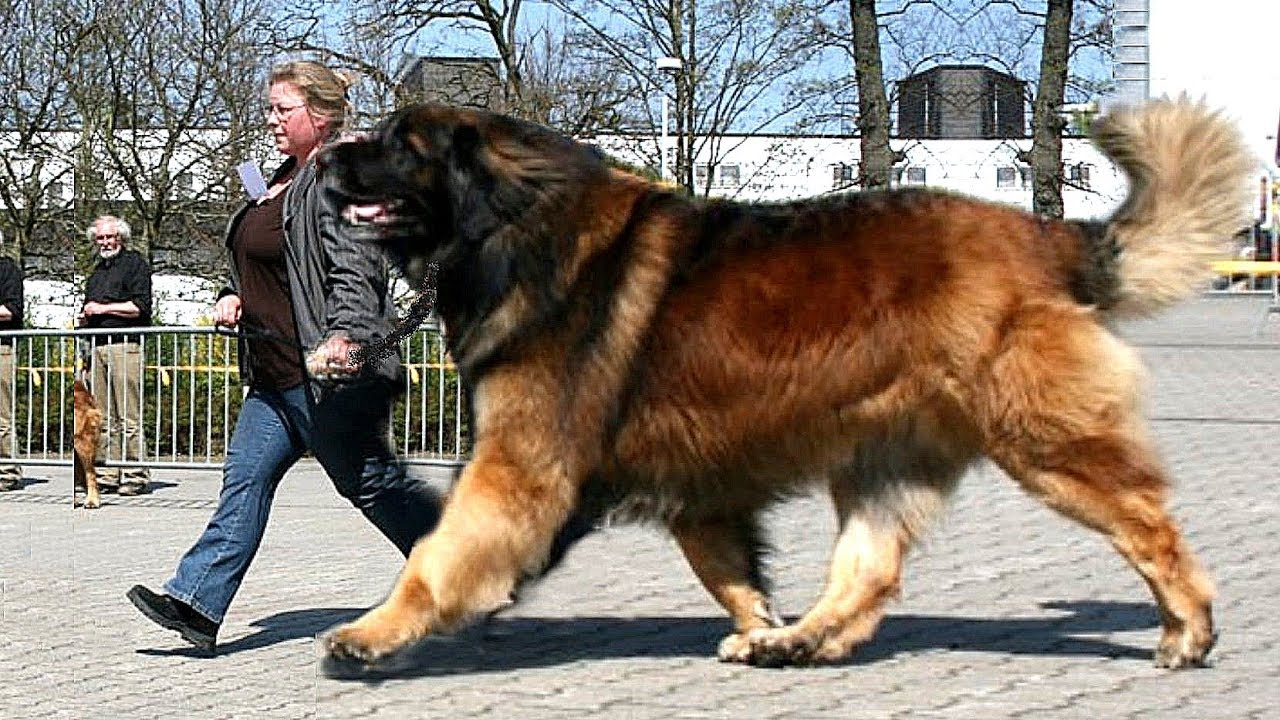 What You Need to Know About Choosing the Best Large Breed Dog Food